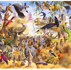 The Wildlife Collection n°4 Prairie and Desert- puzzel 1000 stuks Treecer